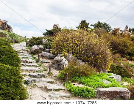 Stony Stairs In The Rockery In Kyiv Botanical Garden