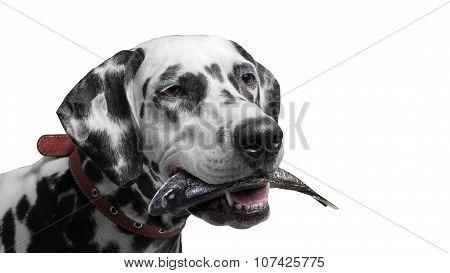 Fishing village Dog