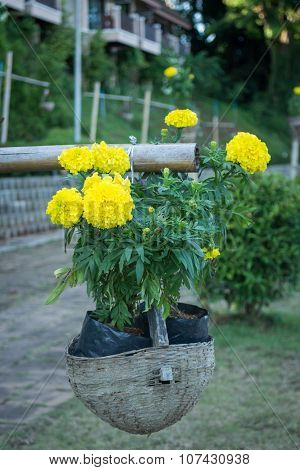 Yellow Flower Bloom Hang On The Basket