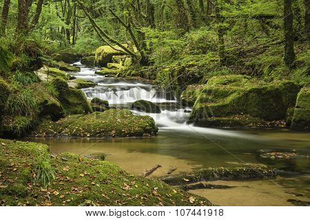 Stunning Landscape Iamge Of River Flowing Through Lush Green Forest In Summer