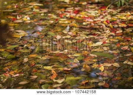 Vibrant Autumn Fall Leaves Floating In Lake Abstract Landscape