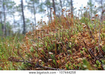 Small Marsh Plants