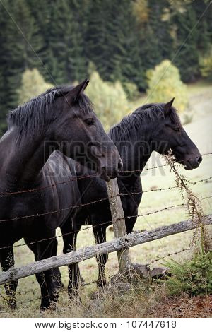 Two horses behind wire fence