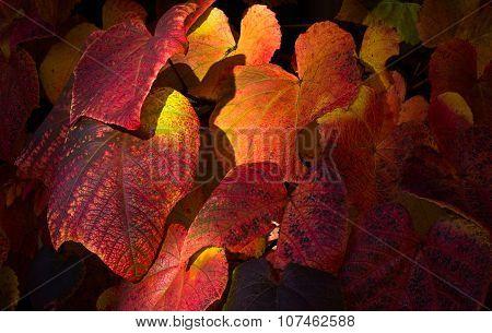Sunnu Light Spot On Multi Colored Autumn Ivy Vine Leaves