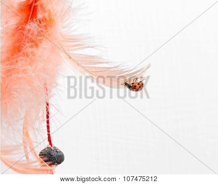 ladybug attacked orange feather