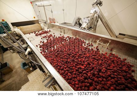Frozen Raspberry Processing Business