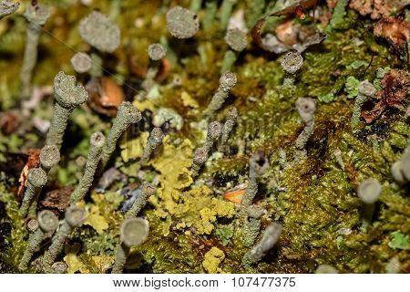 Moss Fungus Macro Background Slime