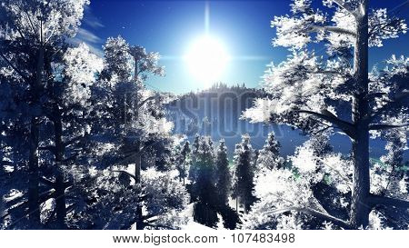 Snow covered Christmac forest in mountains