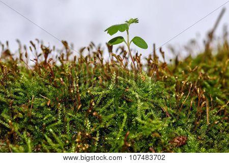 Moss Stems Fungus Macro Background