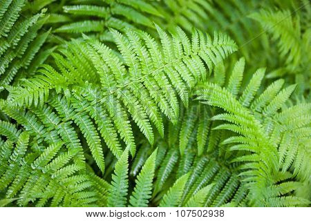 Green Fern Stems And Leaves