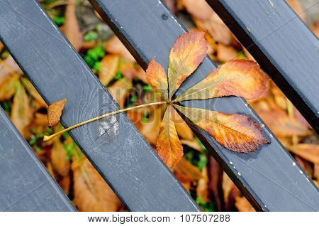 Autumn Dry Leave On The Bench In The Park