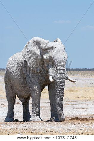 Big White Elephant