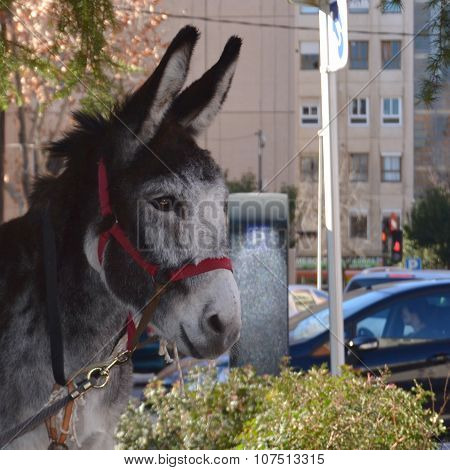A donkey in the parking