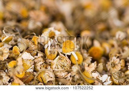 Dried Camomile (background Image)