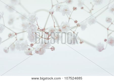 White flower on light background. Soft focus. Vintage retro style.