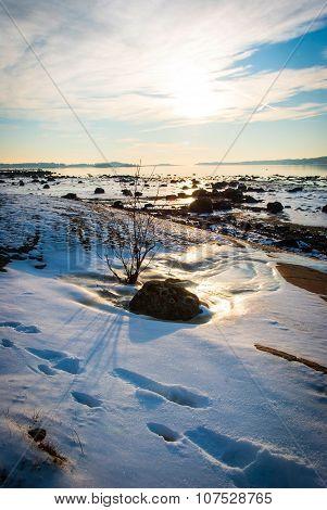 Bush At Frozen Fjord Sunshine, Norway