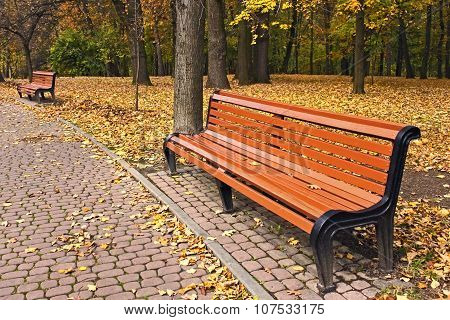 Bench In Park In Falling Season