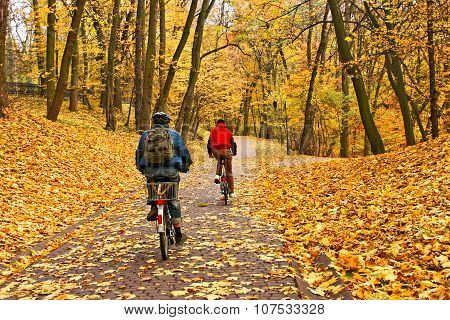 Bicyclists Ride In Park In Falling Season