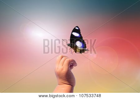 Hands and butterflies On blurred background.beautiful, beauty, blue, climate, cloud, cloudscape, color.children going to be held in dad hand on the ground after blur background: Reforestation, sustainable world forest.happy,Card,posters, websites