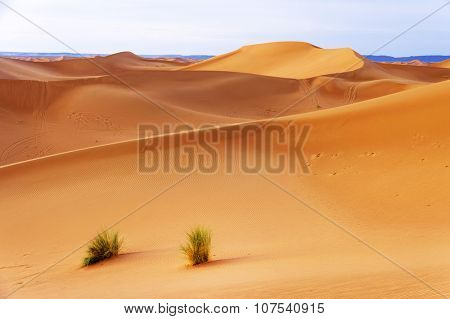 Sunrise light in Sahara Desert, Africa