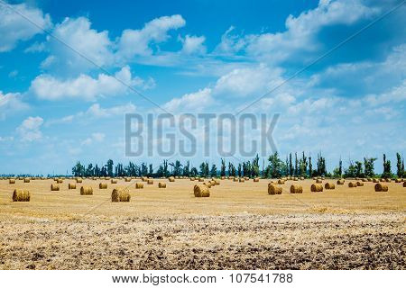 Straw bales on farmland
