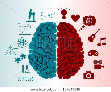 Brain infographics illustration