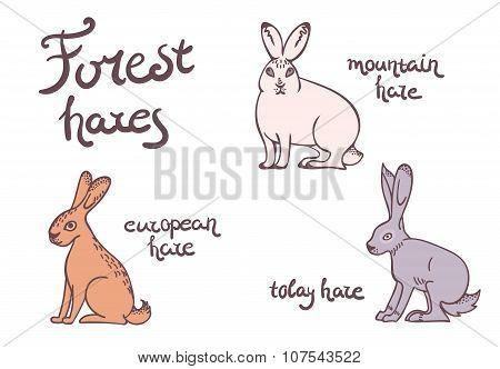 Forest hares set