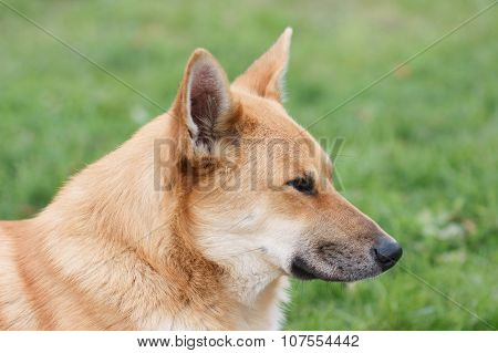 Portrait Of Dog In Profile