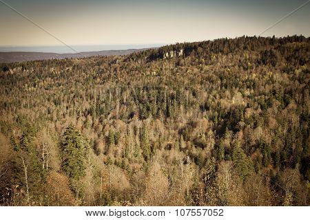 Autumn Forest Landscape, Textured Background.
