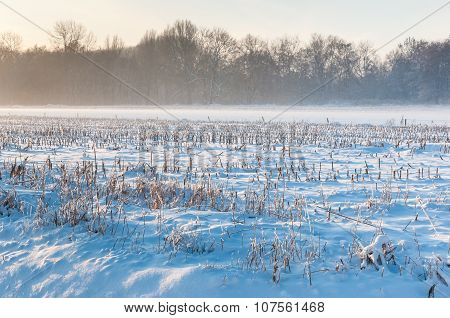Stubble Field Covered With Snow
