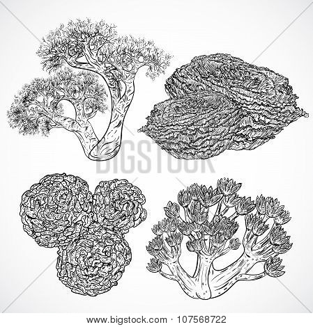 Collection of marine plants and corals. Vintage set of black and white hand drawn marine flora. Isol