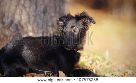 Portrait Of A Black Mongrel Puppy