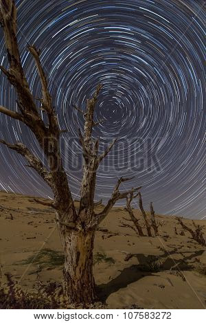 Petrified tree and Star trails over Tarifa dunes
