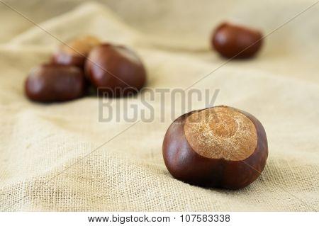Chestnut Close-up On Beige Cloth
