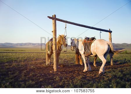 Two Horses Tied On The Post Together Scenery Concept
