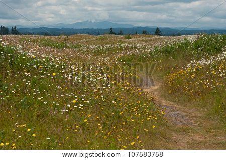 Washington Meadow