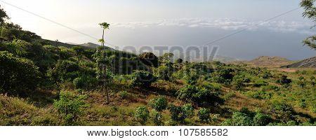 Monte Preto Yuca Fields