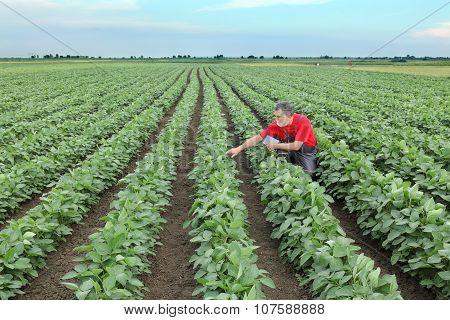 Farmer Or Agronomist In Soy Bean Field