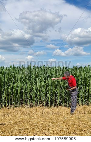 Agriculture, Farmer In Corn Field