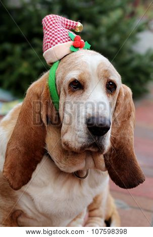Dog Christmas cap
