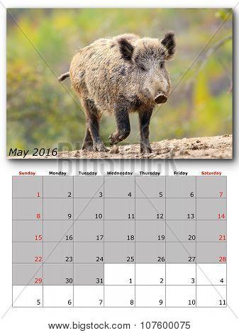 Wildlife Calendar May 2016