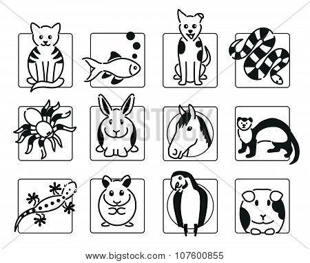 Popular pet animals in black
