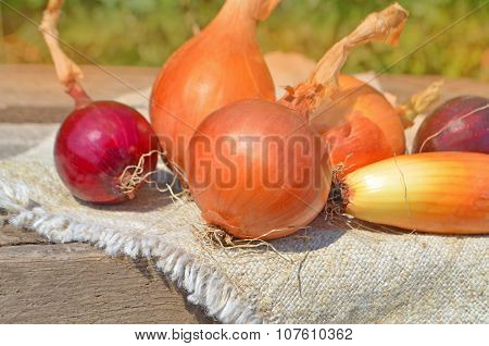 Ripe onion on fabric background