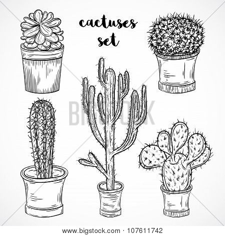 Collection of succulent plants and cactuses in pots. Black and white hand drawn vector illustration