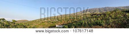 Cornfields On The Mountain