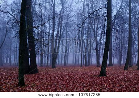 Autumn Foggy Park  - Beautiful Autumn Landscape