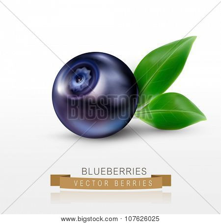 vector blueberries isolated on a white background