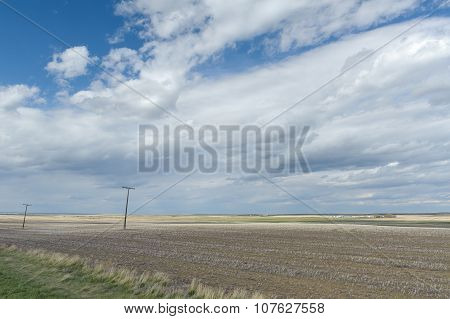Wheat Field Of Canadian Prairies Perspective View