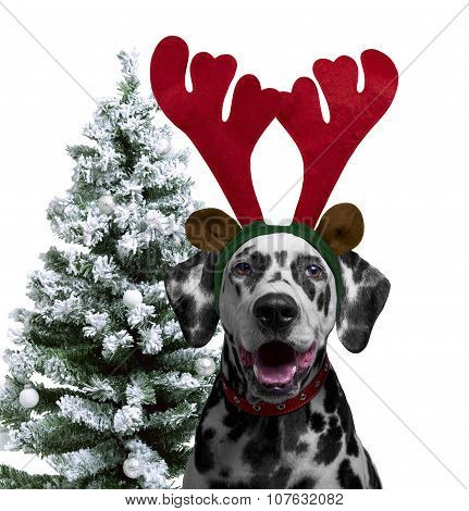 Dog Dalmatian Dress For The New Year As A Christmas Reindeer Hor