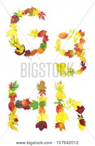 Font made of autumn leaves isolated on white. Letters g and h.